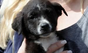 Υιοθεσία αδέσποτων ζώων: Αυτή είναι η εγκύκλιος του ΥπΑΑΤ