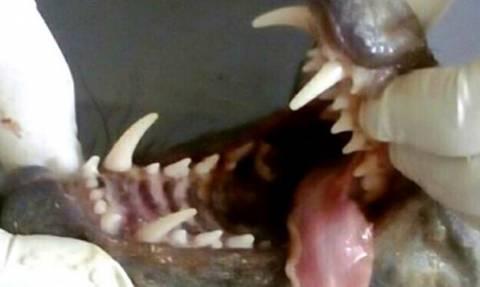 Αιχμαλώτισαν τον απόλυτο τρόμο: Δείτε το μυθικό τέρας που ρουφούσε το αίμα τους για μήνες! (vid+pic)