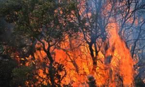 Εκπρόσωπος Π.Υ.: «Περίεργη» η φωτιά στα Δερβενοχώρια - Εξετάζουμε ενδεχόμενο εμπρησμού