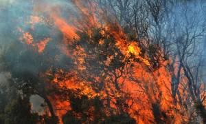 Μάννα εξ ουρανού η σφοδρή καταιγίδα για τη μεγάλη φωτιά στα Δερβενοχώρια