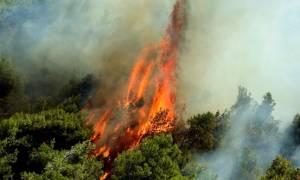 Συναγερμός στην Πυροσβεστική για φωτιά στη Λάρυμνα