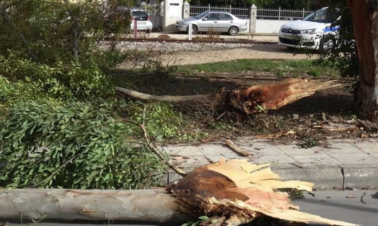 Πτώση δέντρου απέκλεισε το Χαλάνδρι