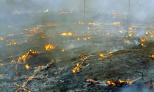Σε ύφεση η φωτιά στο Ηράκλειο