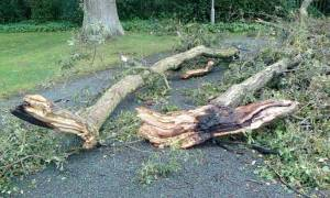 Παραλίγο τραγωδία στην Κρήτη: Δέντρο πέφτει στο δρόμο την ώρα που περνούσε μία 4χρονη