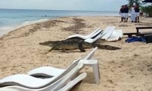 Τρόμος στην παραλία: Κροκόδειλος περπατά ανάμεσα σε ανυποψίαστους τουρίστες! (video)