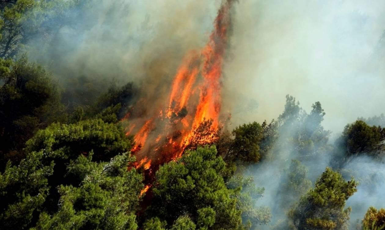 Φωτιά Σάμος: Στις φλόγες το νησί - Καίγονται χιλιάδες στρέμματα πευκοδάσους (photos)