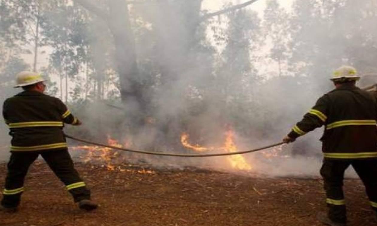 Φωτιά Σάμος: «Καλύτερη η εικόνα» της πυρκαγιάς - Κάηκαν αρκετά στρέμματα δάσους