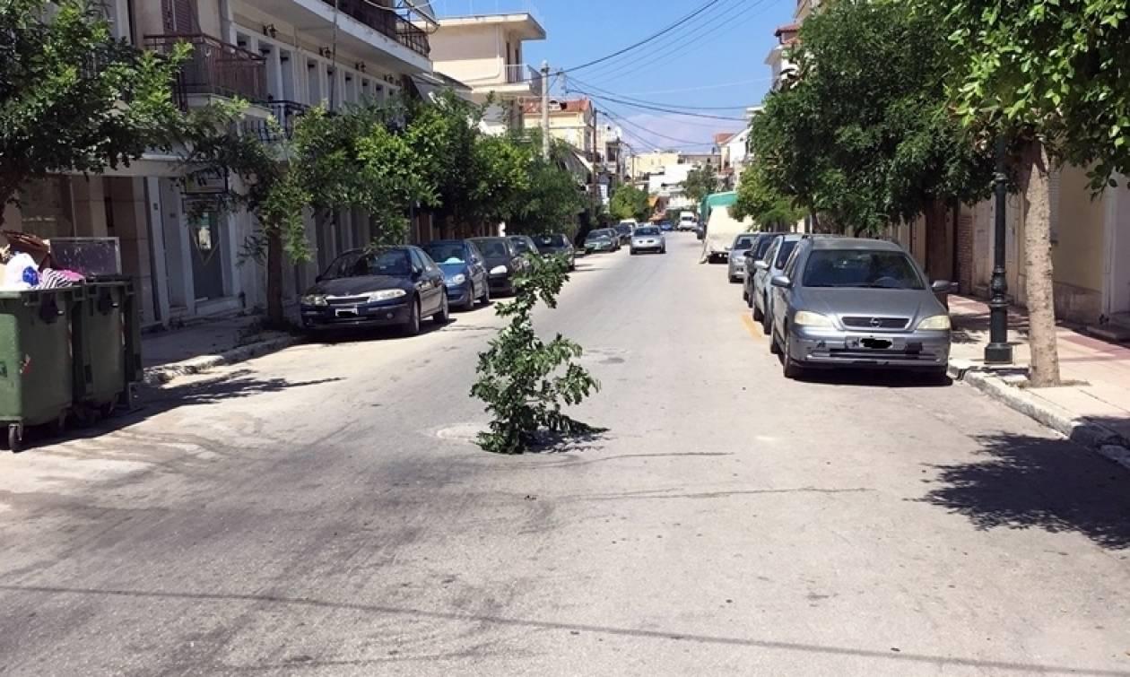 Απίστευτη καινοτομία! Φύτεψαν δέντρο σε λακούβα για να την βλέπουν τα αυτοκίνητα (pics)
