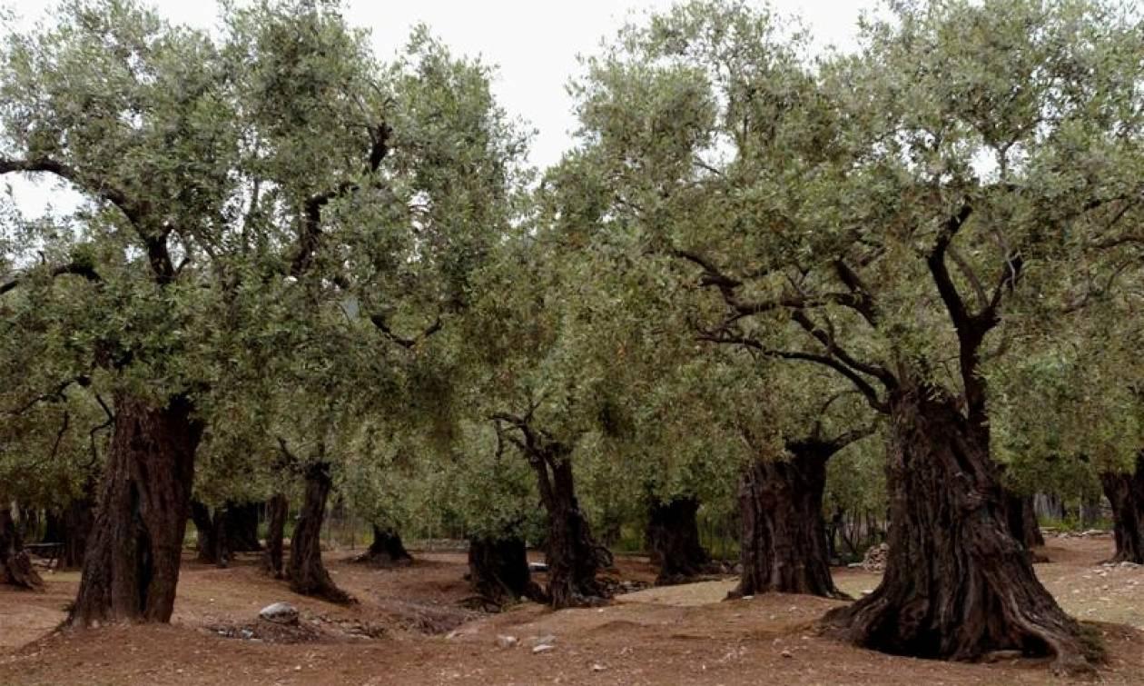 Life: Μελετά την ευπάθεια της μεσογειακής γεωργίας στην κλιματική αλλαγή