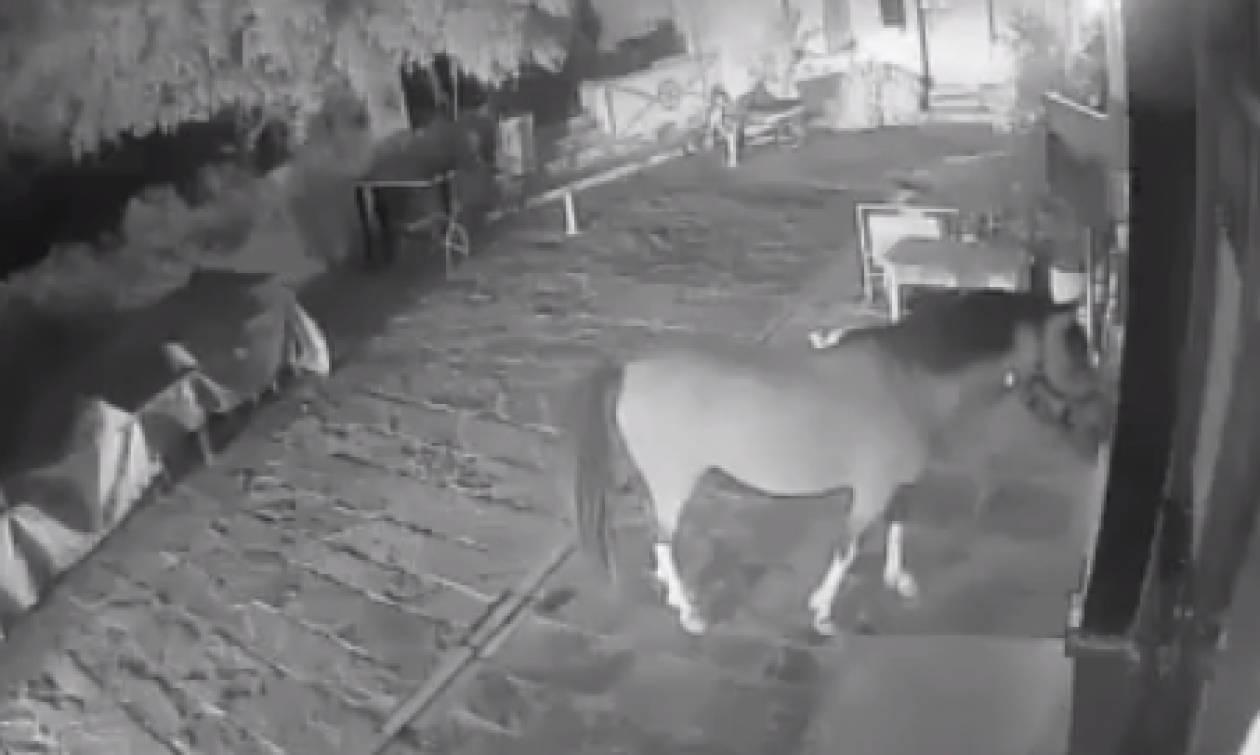 Ρέθυμνο: Περιπλανώμενο άλογο έφαγε σαλάτες και δάγκωσε πελάτες ταβέρνας! (video)