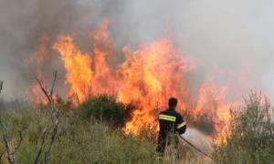 Συναγερμός στην Πυροσβεστική για φωτιά στον Αλμυρό Βόλου
