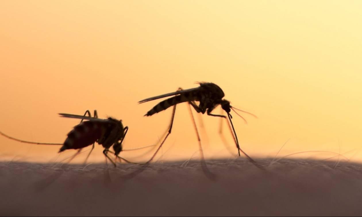 Κουνούπια: Το απόλυτο κόλπο για να μην σας τσιμπάνε