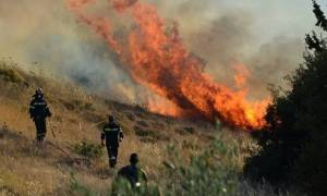 Μεγάλη πυρκαγιά στα Ιωάννινα, κοντά στο χωριό Νεοχώρι