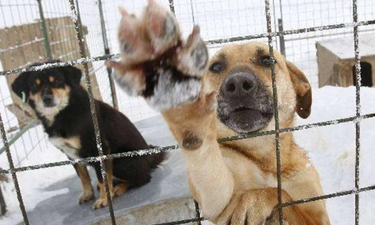 Χρηματοδότηση Δήμων και Συνδέσμων Δήμων για αδέσποτα ζώα