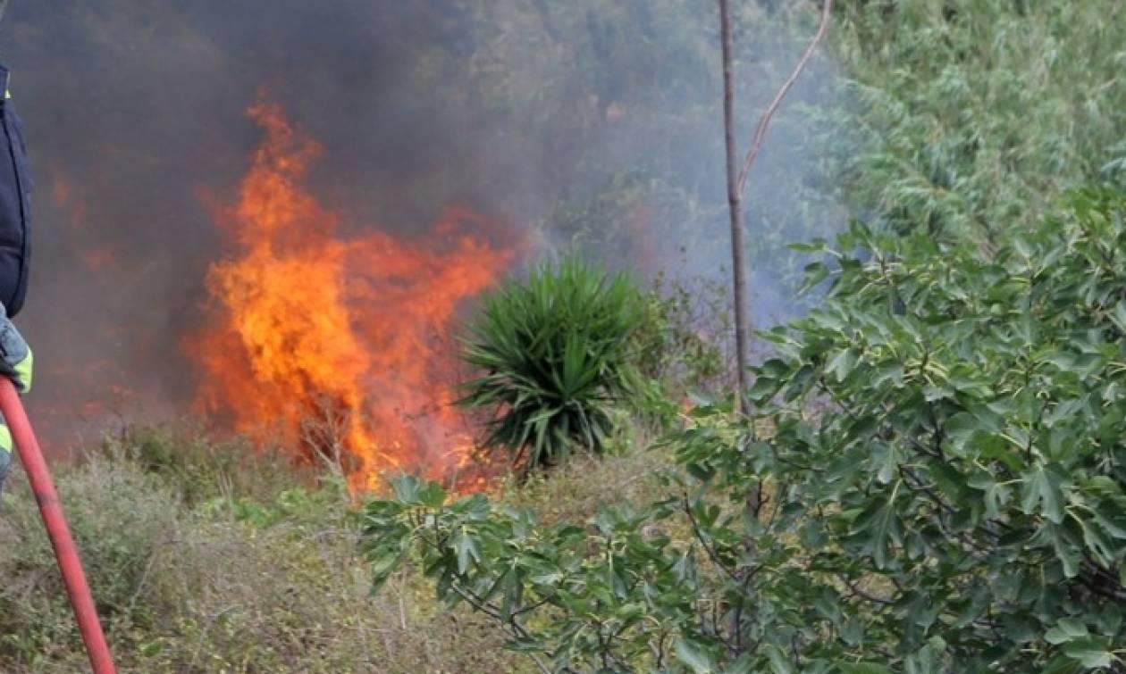 Πυρκαγιά στην Αλβανία απειλεί μειονοτικά χωριά - Ζητούν βοήθεια από την Ελλάδα