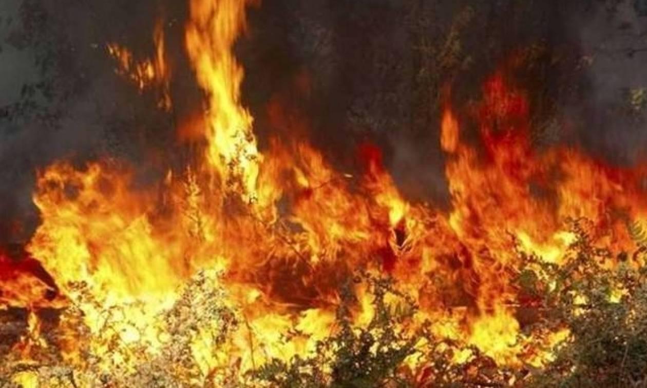 Χαλκιδική: Πυρκαγιά στο χωριό Σανά