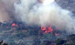 Φωτιά Χίος: Το νησί μετράει τις πληγές του - «Στάχτη» έγιναν τα μαστιχόδεντρα