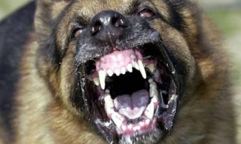 Ως πότε θα κάνουμε τα στραβά μάτια στις επιθέσεις ζώων σε ανθρώπους;
