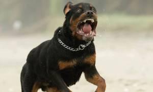 «Το σκυλί φύλακας δεν διαφέρει σε τίποτα από μια οπλισμένη καραμπίνα»