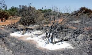 Οι ενορίες της Χίου προσφέρουν το 10% από τα έσοδά τους στους πυρόπληκτους μαστιχοκαλλιεργητές