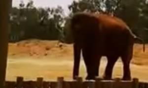 Βίντεο-σοκ: Τραγικός θάνατος επτάχρονης σε ζωολογικό κήπο - Ελέφαντας τής έσπασε το κεφάλι με πέτρα!