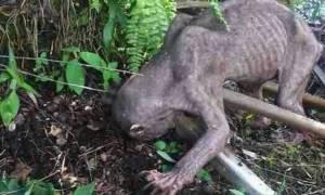 Βρήκαν αυτόν τον «εξωγήινο» και τον ξυλοκόπησαν μέχρι λιποθυμίας! Όταν κατάλαβαν το λάθος τους…(vid)