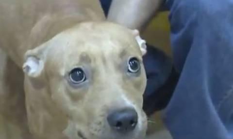 Απίστευτη κτηνωδία: Πέταξε σκύλο από τον τρίτο όροφο πολυκατοικίας! (vid)