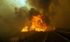 Πύρινη κόλαση στην Εύβοια: Εκκενώνονται οικισμοί (pics)
