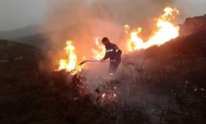 Φωτιά Εύβοια: Τεράστια οικολογική καταστροφή – Κρανίου τόπος μετά την πυρκαγιά
