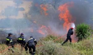 Συναγερμός στην Πυροσβεστική για πυρκαγιά στο Κόκκινο Βοιωτίας