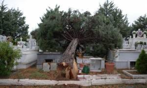 Ανεμοστρόβιλος σάρωσε το νεκροταφείο της Τρίπολης (pics&vid)