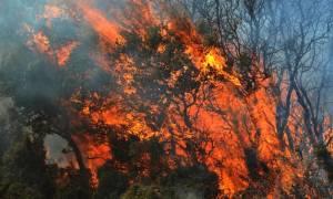 Υπό μερικό έλεγχο η φωτιά στο Δοξάτο Δράμας