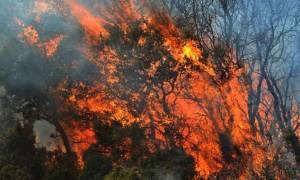 Μεσολόγγι: Υπό μερικό έλεγχο η φωτιά στην Παλαιομάνινα Αγρινίου