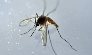Γουατεμάλα: Οι αρχές επιβεβαίωσαν το πρώτο κρούσμα μικροκεφαλίας νεογνού από τον ιό Ζίκα