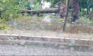 Σκηνές «Αποκάλυψης» στα Τρίκαλα: Ξεριζώθηκαν δέντρα και βούλιαξαν σπίτια (video+photos)