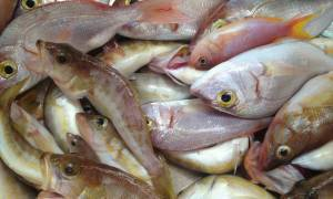 Απίθανο κόλπο: Φτιάξτε την τέλεια... παγίδα για ψάρια σε 30 δευτερόλεπτα (video)