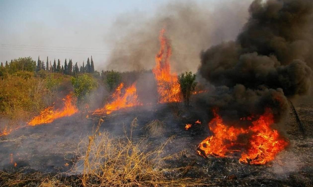 Φωτιά σε εξέλιξη στη Λάρισα