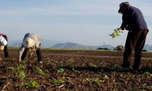 Διπλάσια εισφορά ασθενείας στους αγρότες
