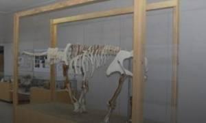 Εγκαίνια της έκθεσης του ελέφαντα της Τήλου