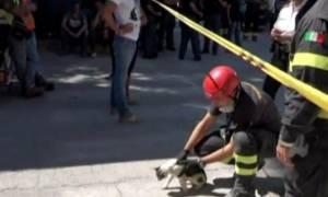 Εφτάψυχες: Δυο γάτες βρέθηκαν ζωντανές στο Αματρίτσε 16 ημέρες μετά τον σεισμό! (vid)