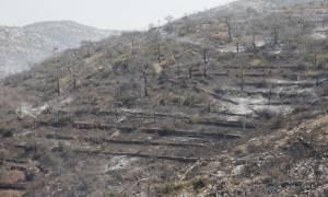 Πέθανε η ηλικιωμένη που είχε υποστεί βαριά εγκαύματα στη φωτιά της Χίου