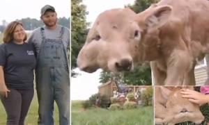 Απίστευτο! Πρόβατο με δύο πρόσωπα γεννάει το μωρό του... (vid)