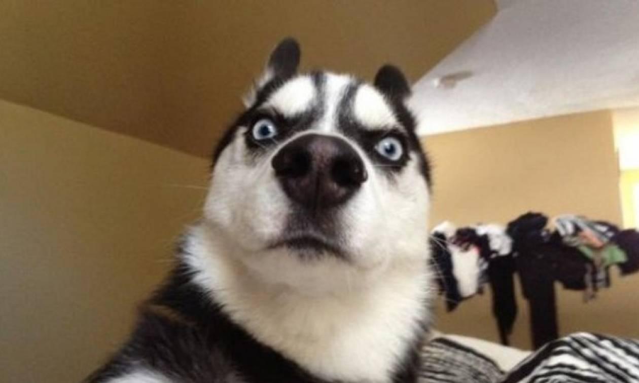 Όταν η ταμπέλα «Προσοχή Σκύλος» σε προϊδεάζει για κάτι άλλο από αυτό που βλέπεις (Pics)