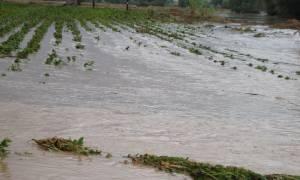 Θεσσαλονίκη: Ολοκληρωτική καταστροφή σε βιοκαλλιέργειες