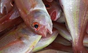 Κρήτη: Αυτή η ψαριά τούς έβαλε σε μεγάλους μπελάδες!