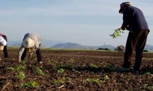 ΟΠΕΚΕΠΕ: Τα δικαιολογητικά για την καλλιεργητική περίοδο 2016 - 2017