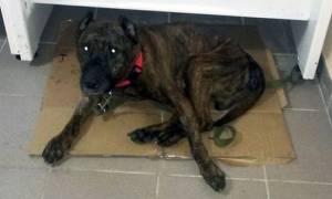 Φρίκη: Βίαζε το σκύλο του δημοσίως επί 8 χρόνια – Δείτε την αντίδρασή του όταν τον ελευθέρωσαν (vid)