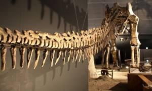 Είναι αυτός ο μεγαλύτερος δεινόσαυρος που περπάτησε στη Γη; (photo)