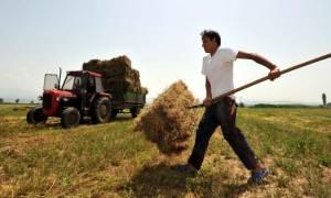 ΟΠΕΚΕΠΕ: Πότε θα πληρωθούν οι αγροτικές επιδοτήσεις