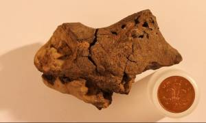 Βρήκαν για πρώτη φορά απολιθωμένο εγκέφαλο δεινοσαύρου της κρητιδικής περιόδου